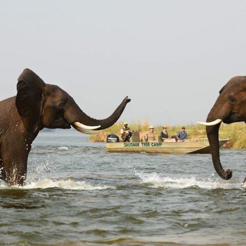 Lower Zambezi River Safari